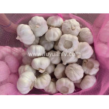 Loose packing fresh garlic